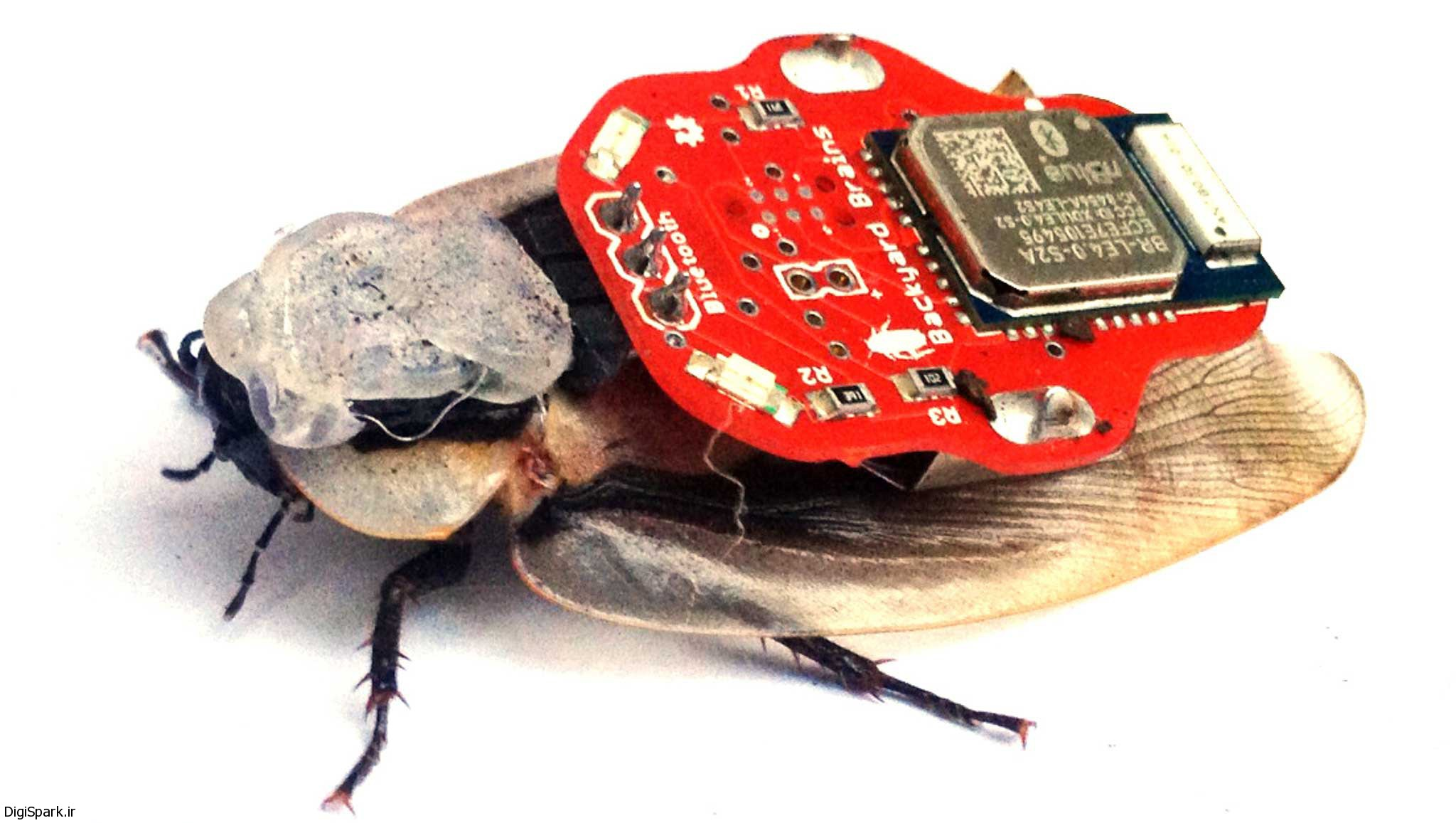 ربات امدادگر الگوگیری از سوسک - دیجی اسپارک