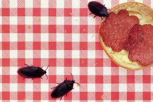robots-infiltrate-insect نفوذ ربات ها به دنیای حشرات